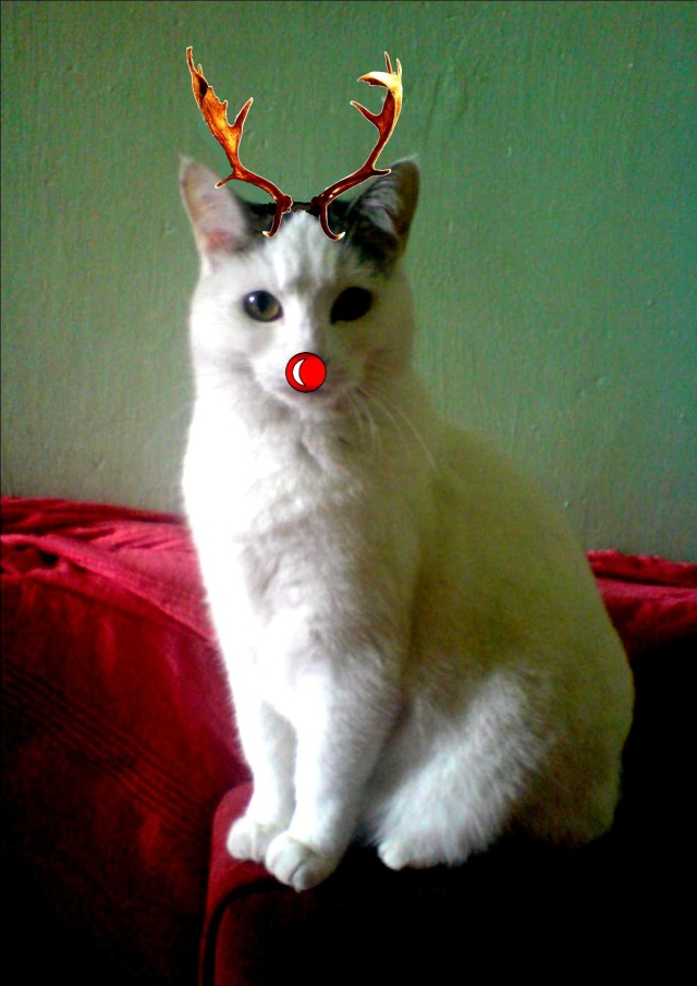 ANGEL REINDEER